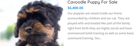 https://petsforhomes.com.au/ad/cavoodle-puppy-for-sale-3/