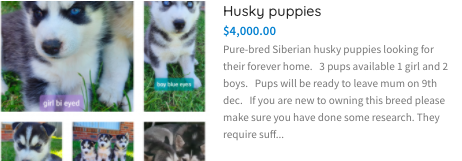 https://petsforhomes.com.au/ad/husky-puppies-2/