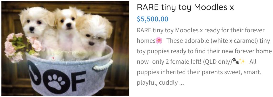 tiny toy moodle cross