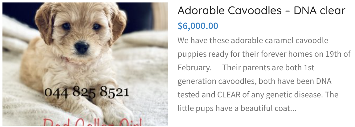 Adroable Cavoodles DNA Clear