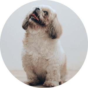 Dog Images Round Changes 1